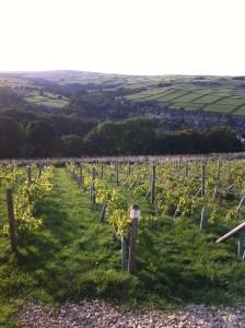Holmfirth Vineyard